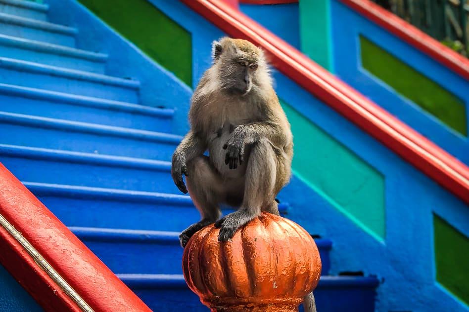 Monkey Batu Caves Stairs Malaysia