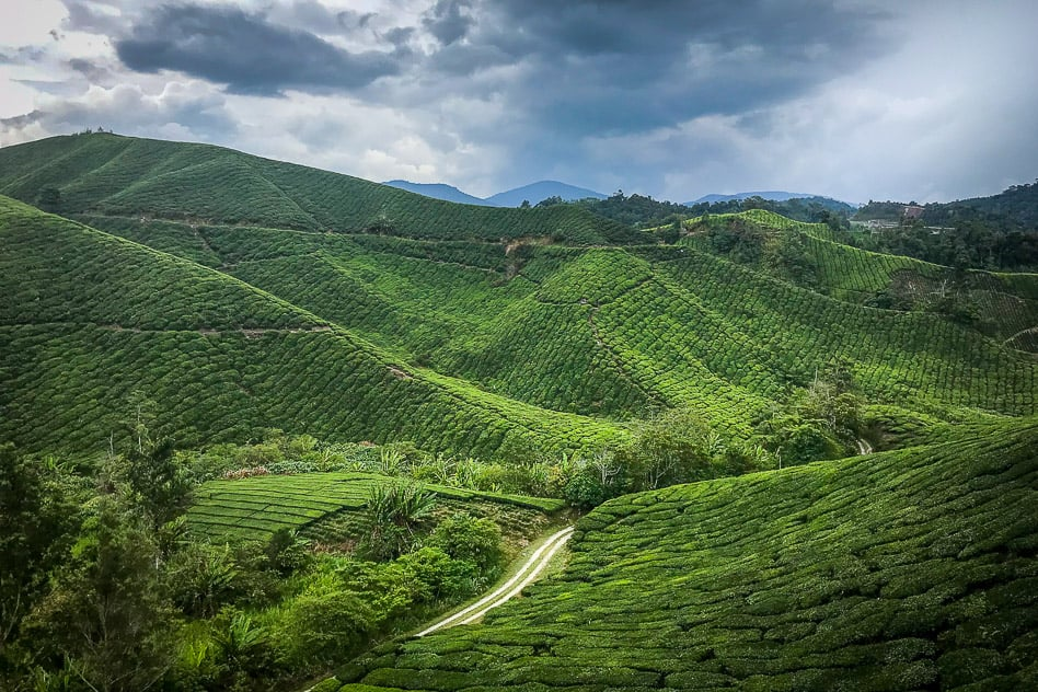 Boh Tea Plantation Cameron Highlands View