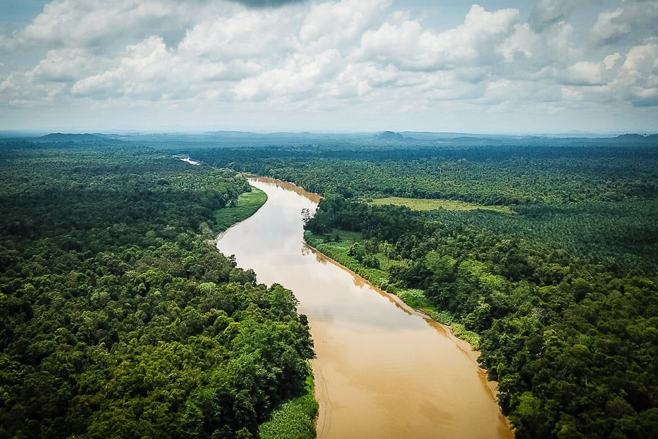 The Kinabatangan River in Borneo with palm tree plantations