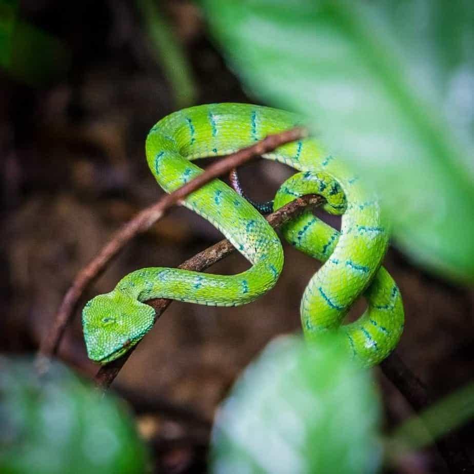 Bako National Park Snake Wildlife