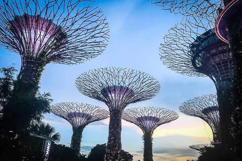 Supertree Grove Gardens By The Bay Singapore trees