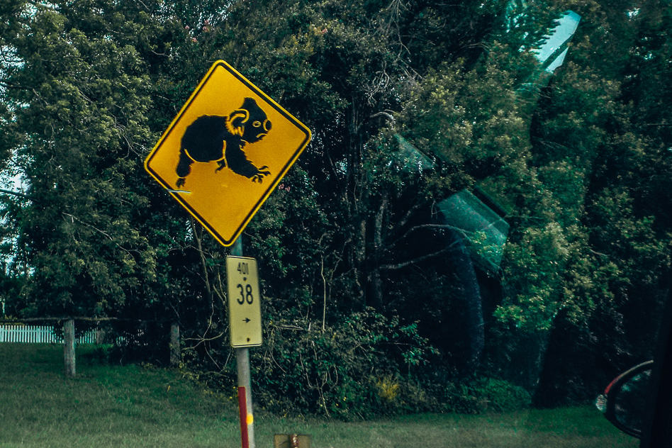 Koala Road Sign Weg Bord Australia