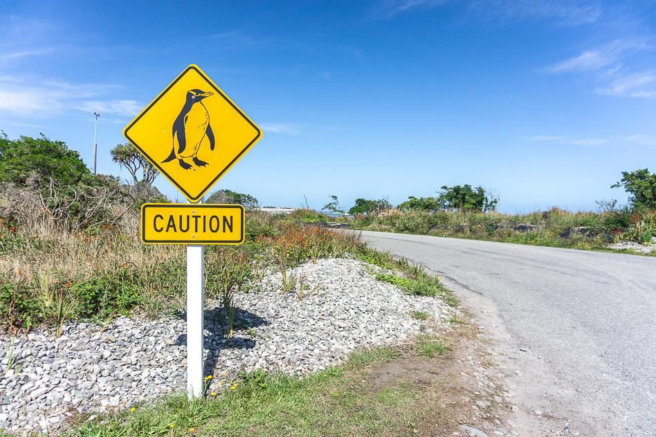 Bord Sign Road Weg Pinguin Penguin New-Zealand