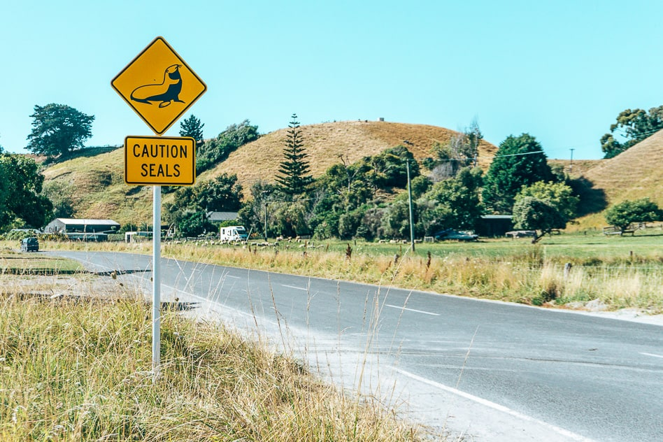 Zeehond Sign Road Weg Bord New Zealand