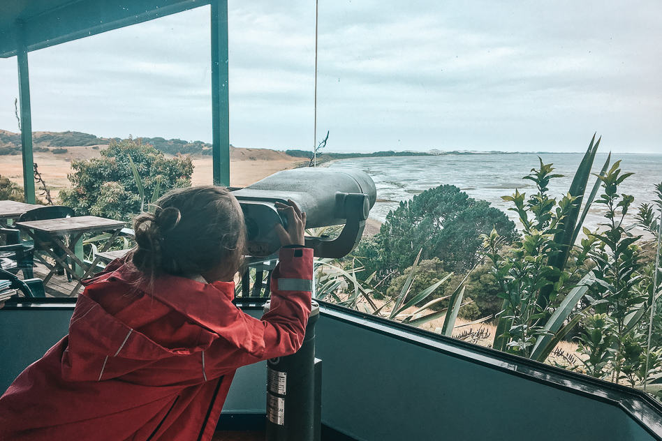 Nature Farewell Spit Bird Watching Kid Cafe