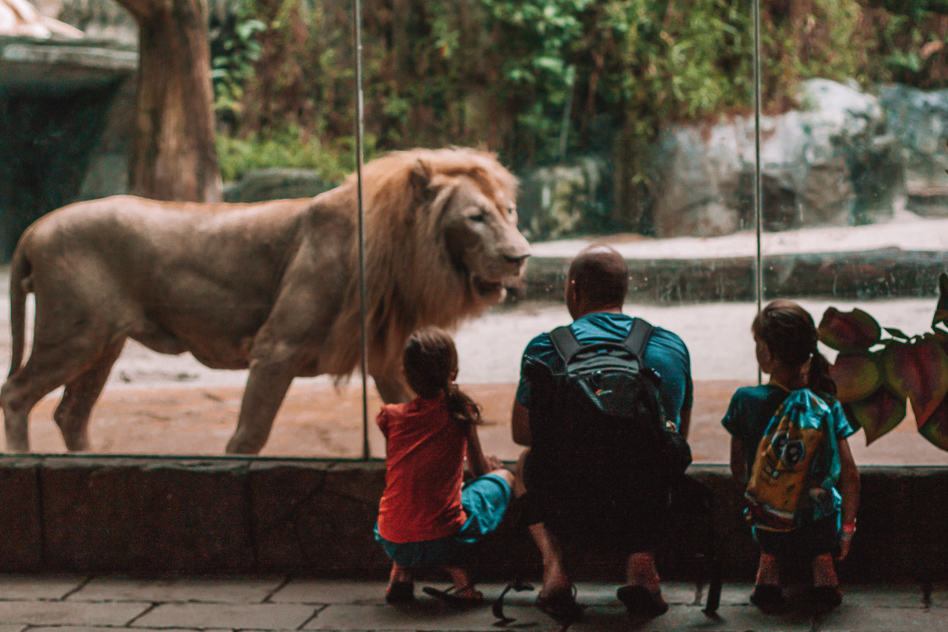 Lion Wildlife Park Sunway Lagoon Family