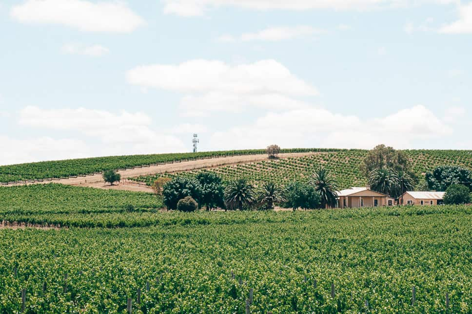 Barossa Valley South Australia Wine