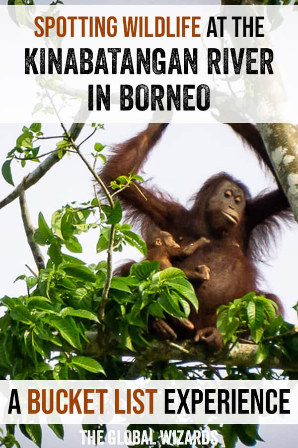 Spotting wildlife along the Kinabatangan River in Borneo