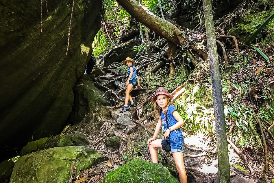 Jungle Walk Bako National Park Borneo