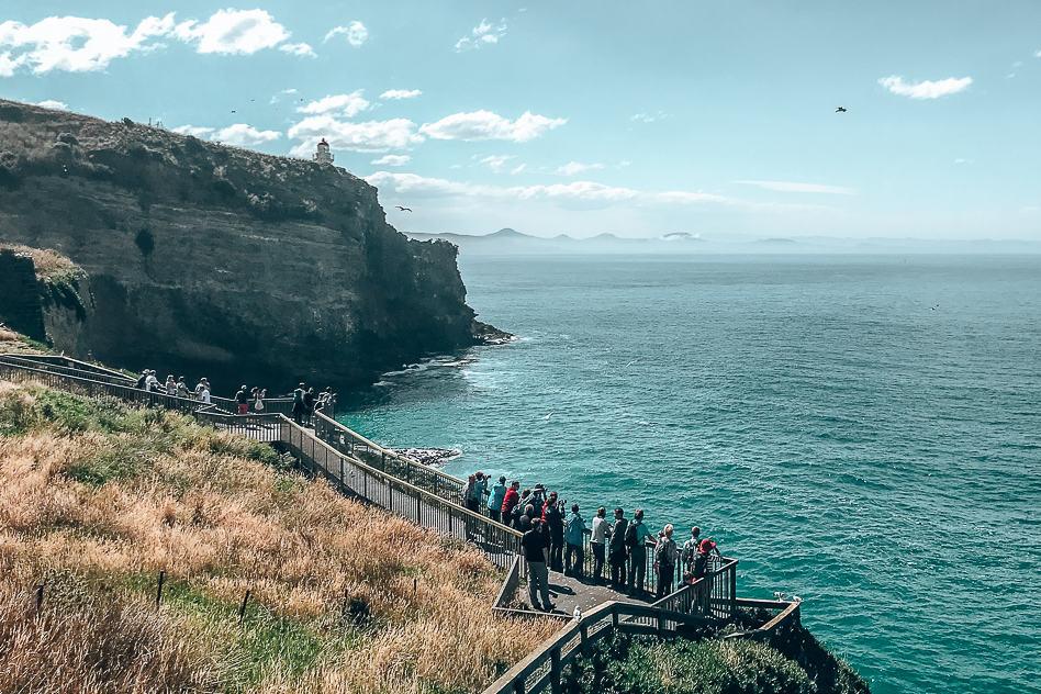 Lookout Royal Albatross Centre Otago Peninsula ELM Wildlife Tours