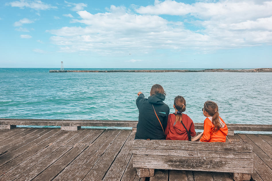 Wildlife Spotting Oamaru South Island