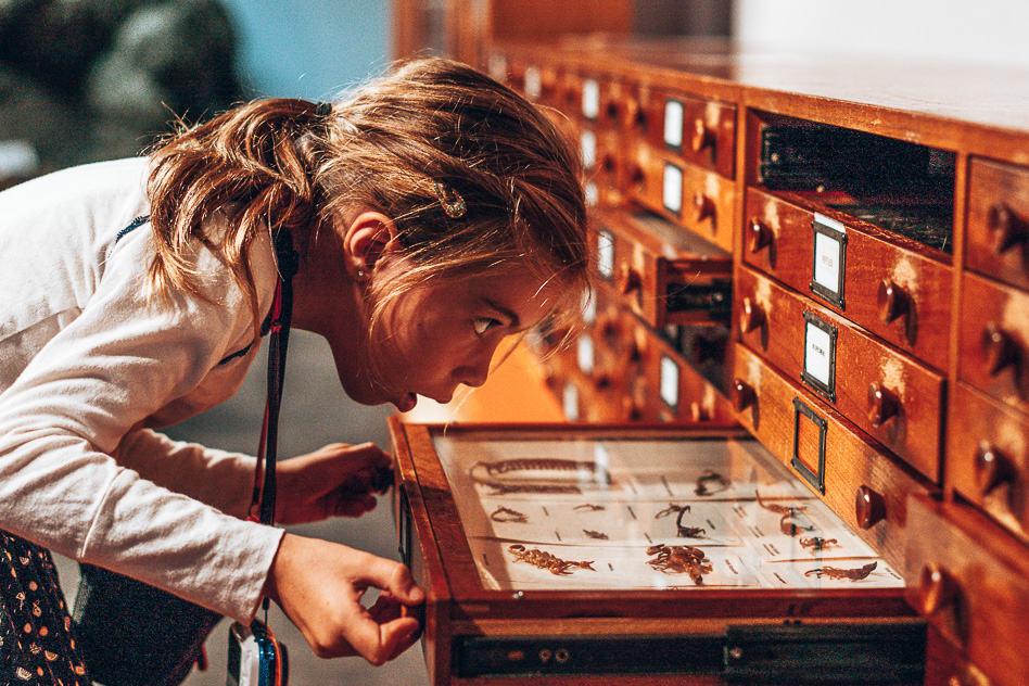 Australian Museum Sydney Discover Kids
