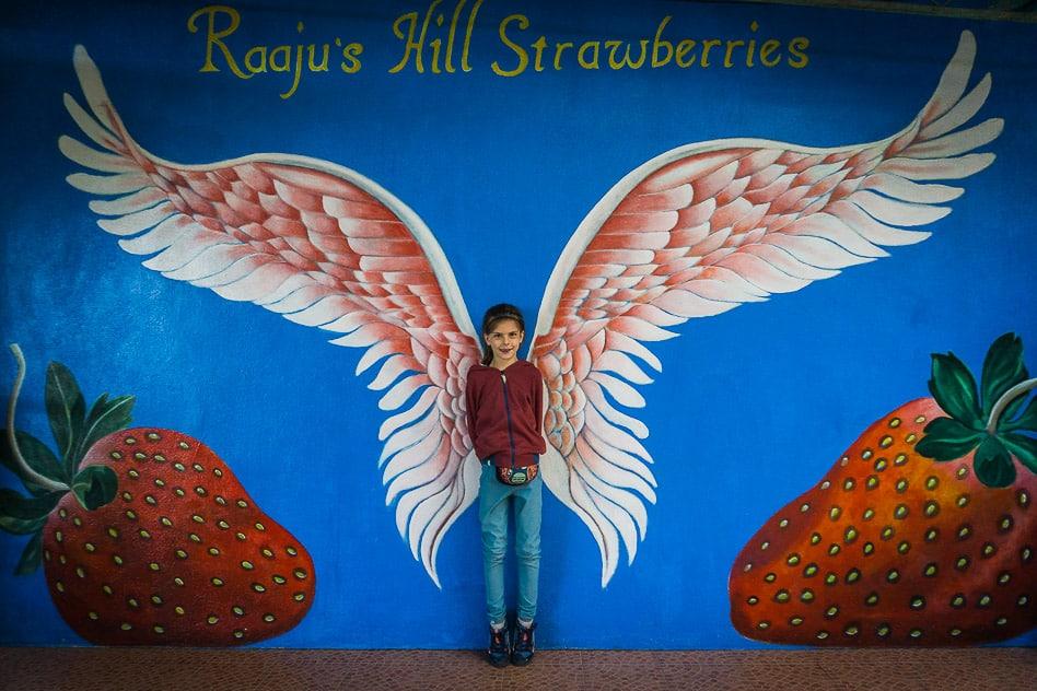 Strawberry farm Raaju Cameron Highlands