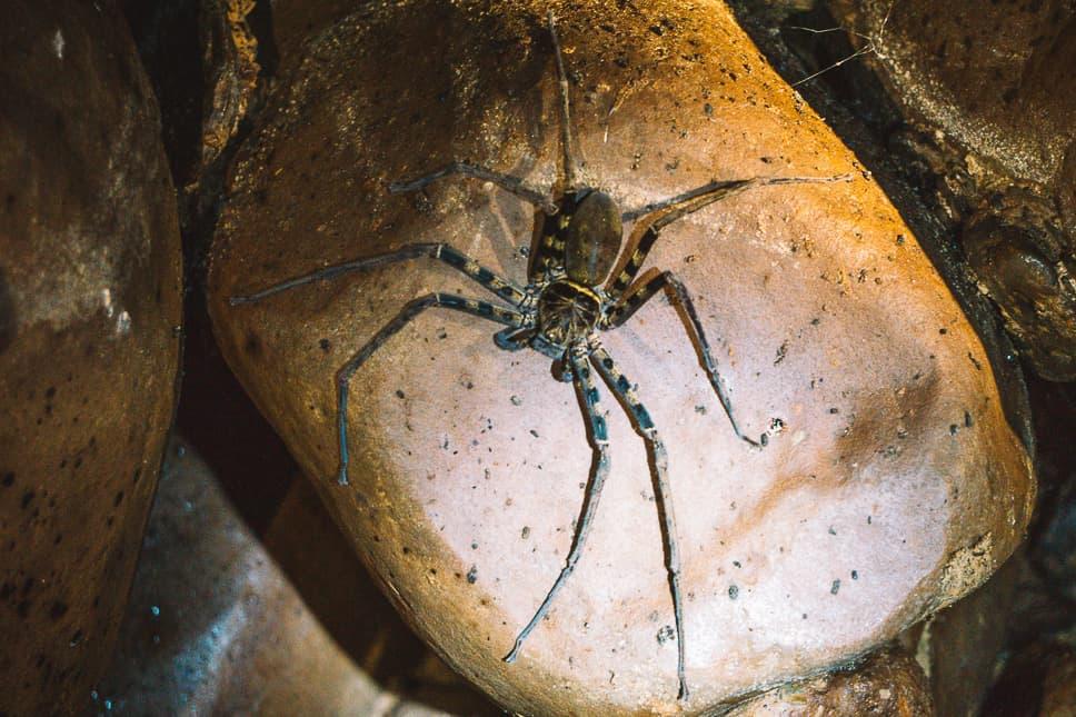 Spider Cave Dark Family Khao Sok