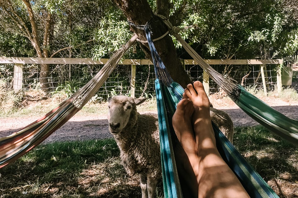 Onuku Farm Hostel Hammock Sheep Banks Peninsula