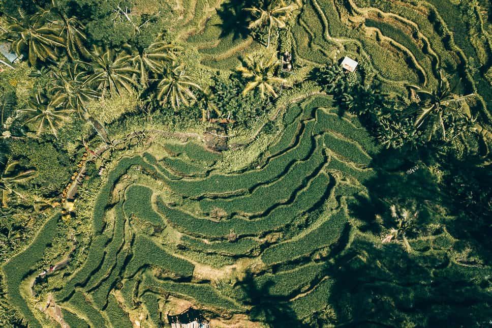 Drone Tegalalang Rice Fields Bali Ubud